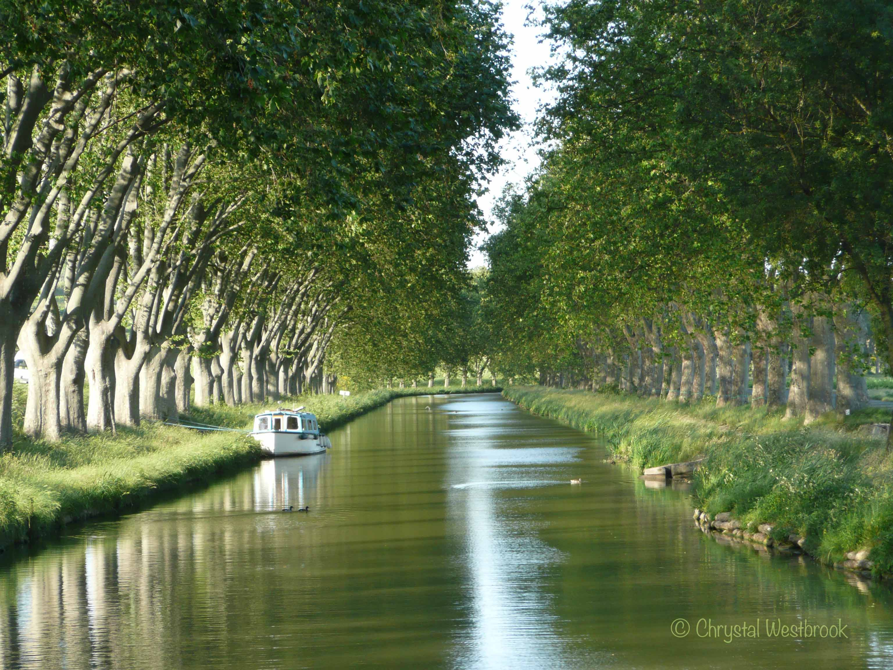 [IMAGE] Tree-lined Canal du Midi in summer