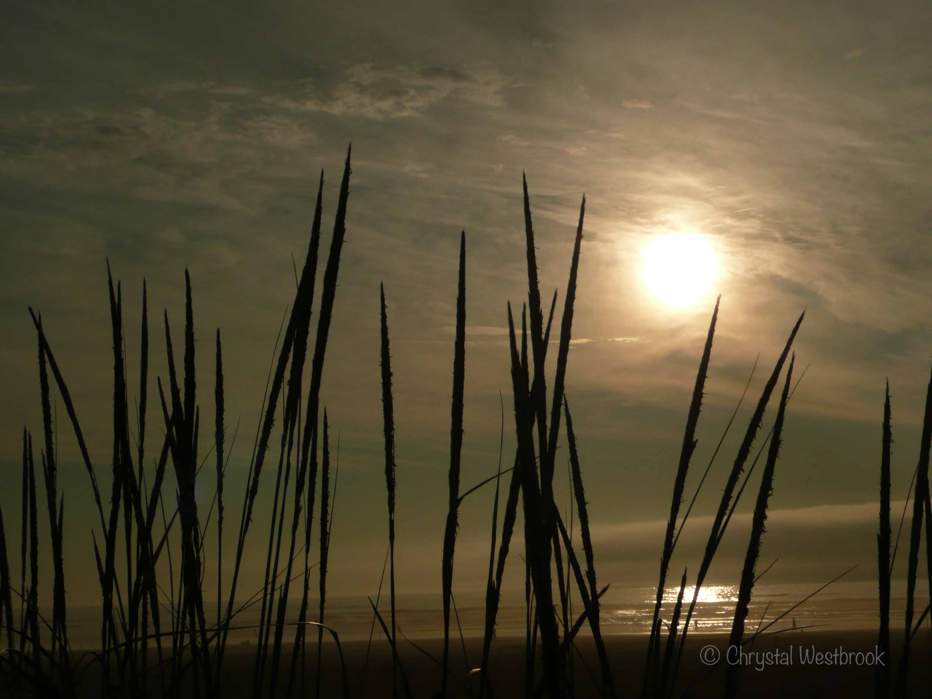 [IMAGE] Silhouette of sea grass at sunset